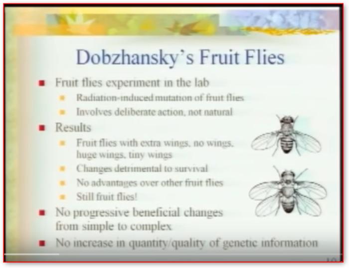 dobzhanskyfruitflies